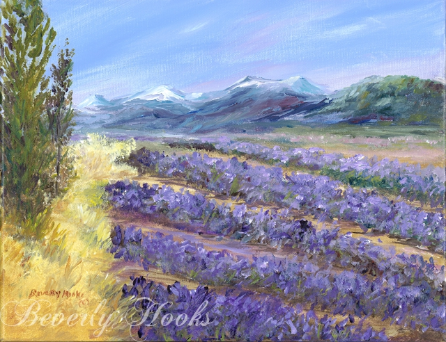Lavender Field in Sequim, WA by Beverly Hooks